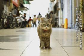 広島Cat Street View-尾道編