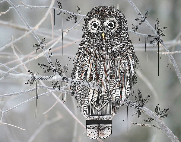 sketch-owl