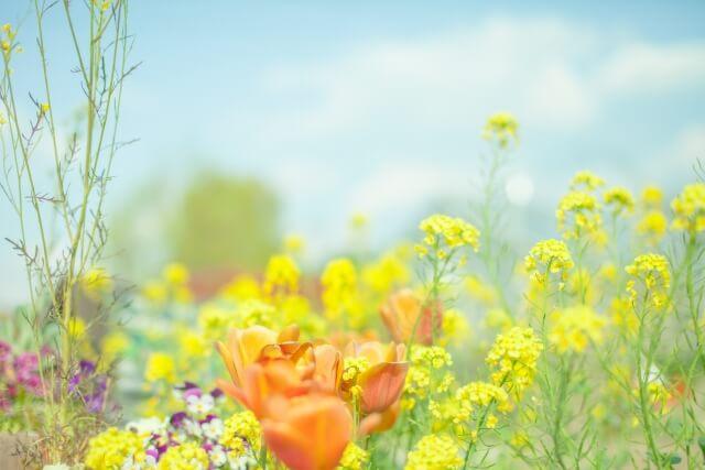 1話 全話 あの日見た花の名前を僕達はまだ知らない のアニメ動画を