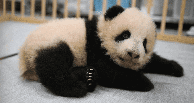 foodpanda(フードパンダ)【500円クーポン】パンダ命名記念先着500名限定キャンペーン